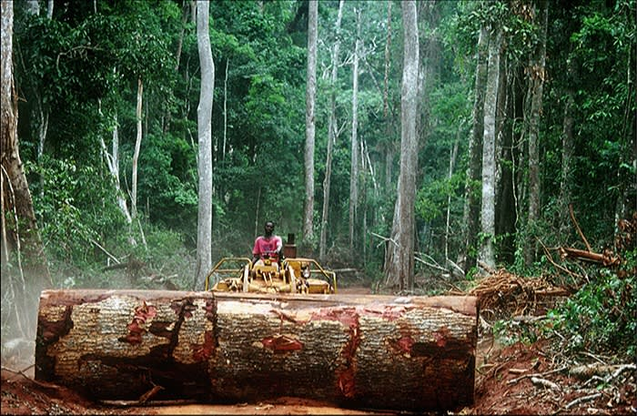 For world's forests, pandemic probably made 2020 'another staggering year'