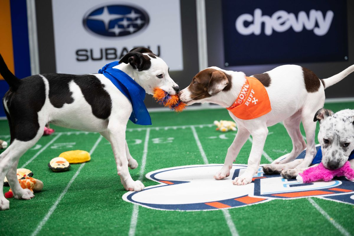 Underdogs of Team Ruff were awesome young men: Doggy Bowl 2021 champ recap